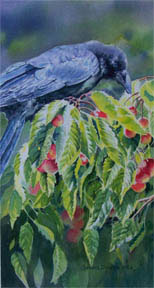 Counting-Cherries-watercolour-Sandra-Donohue-AFCA