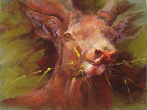 Sharon-Bamber,-Elk-Male,-18-x-24,-soft-pastel